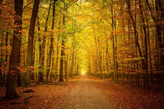 Photo: roarculture.com
